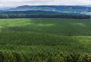 Brambles achieves zero deforestation commitment